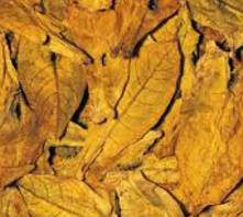Oriental Tobacco Leaves